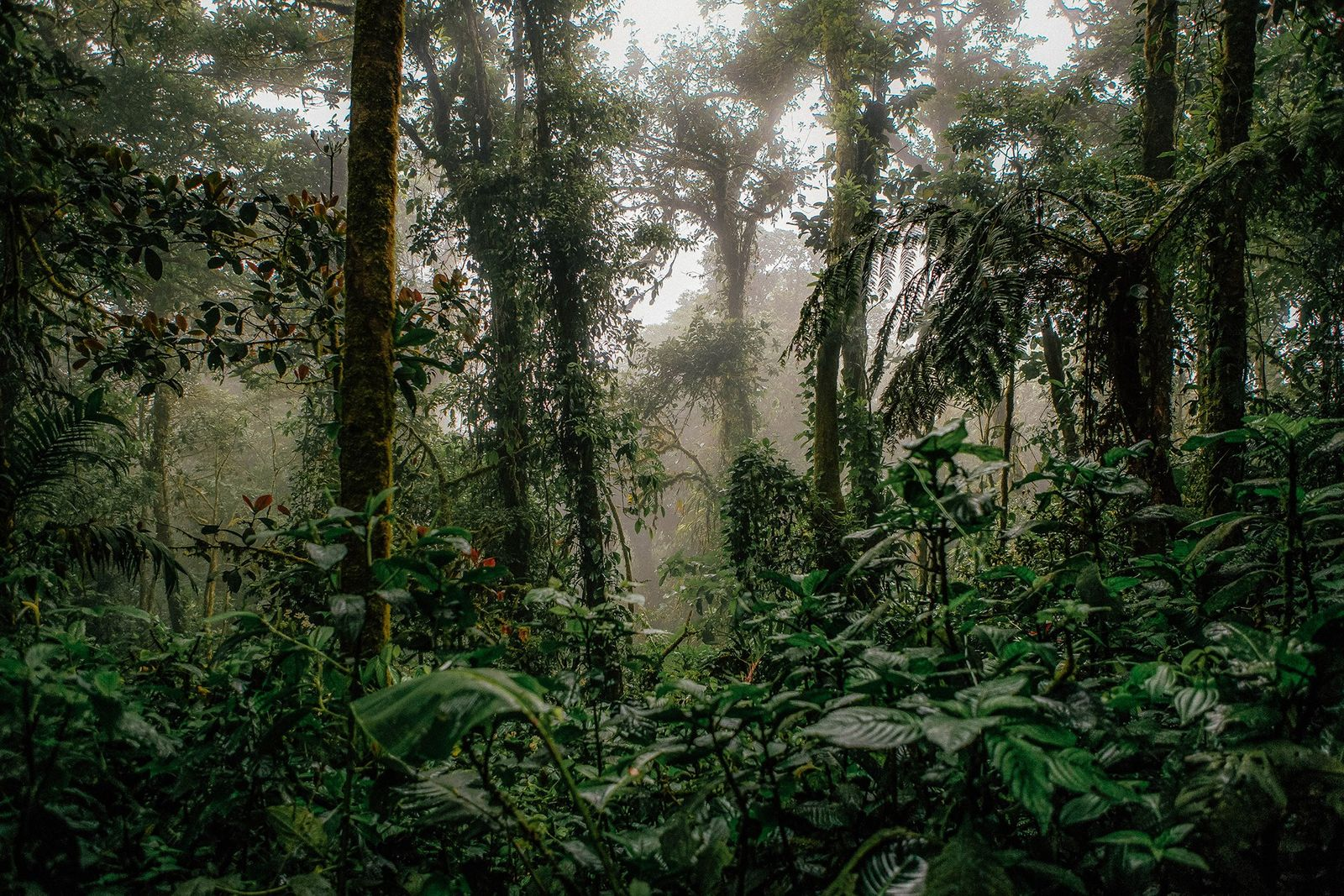 The rainforests of Monteverde, in Costa Rica, attract thousands of nature lovers hoping to glimpse species ...