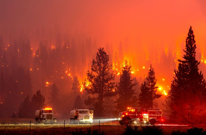 Firefighters battle blazes from the Hog fire, which exploded across more than 9,500 acres of land ...