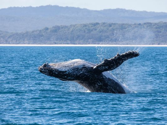 A guide to ethical whale tourism in the 21st century