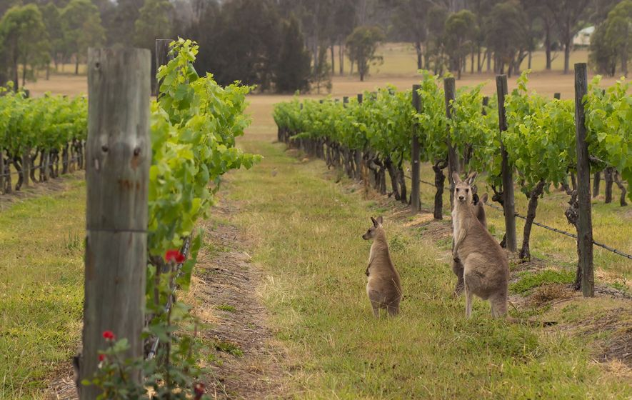 Getting to know dessert wines from Australia to Italy