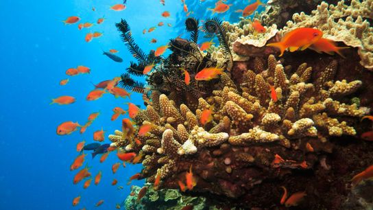 The Great Barrier Reef stretches for over 1,400 miles. It has around 900 islands, more than ...