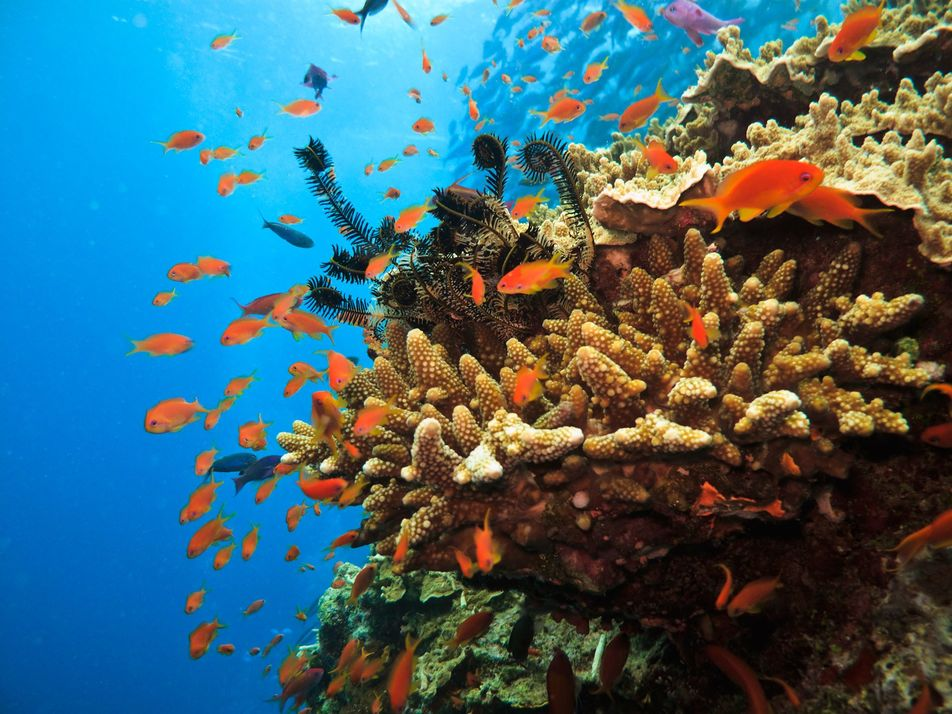 What happens next? The impact of coronavirus on Australia's endangered coral reefs