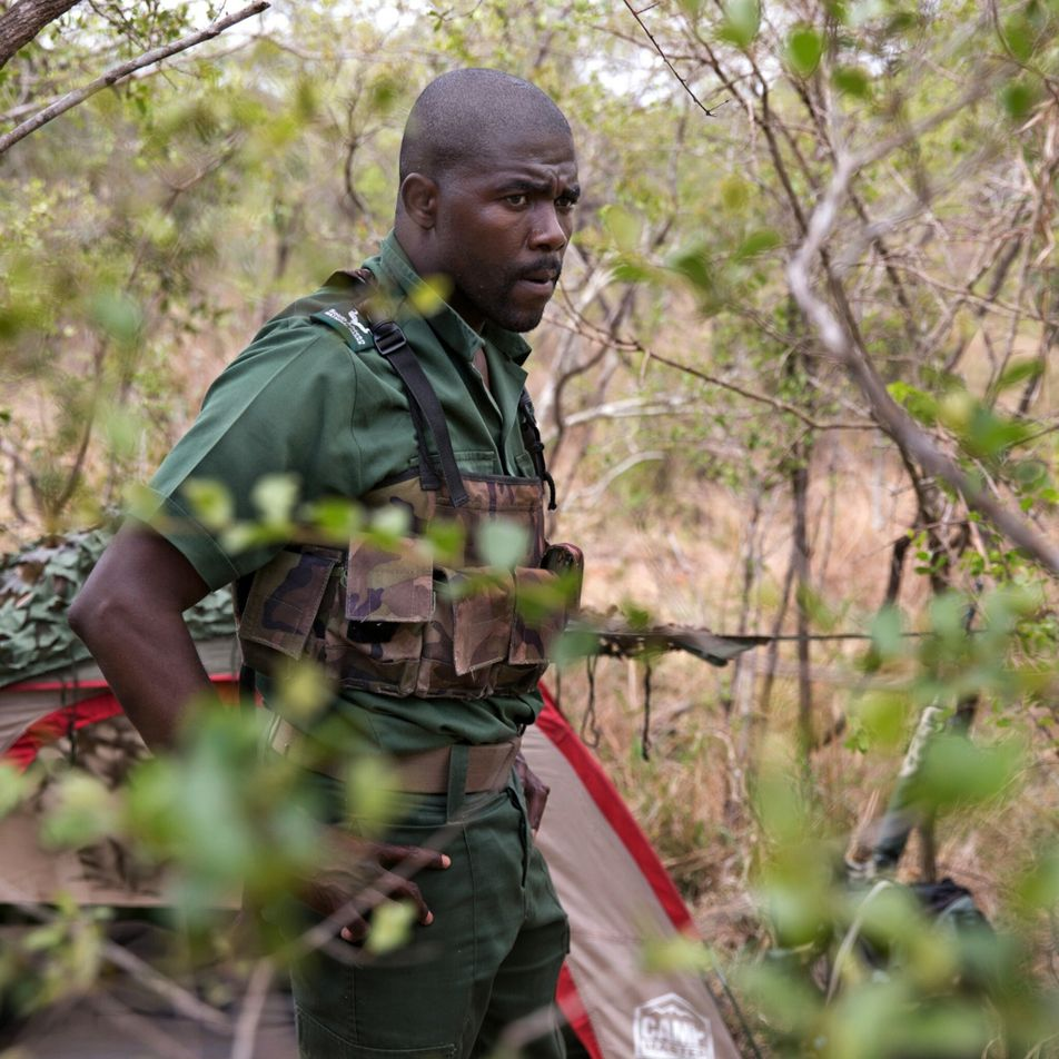 How rhino protectors in South Africa have become a major threat to the species