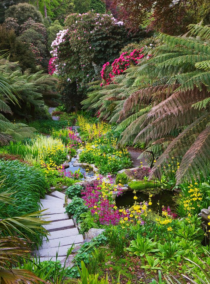 Cornwall's Trebah Garden is Britain's answer to a tropical paradise, where exotic planting schemes flaunt dramatic ...