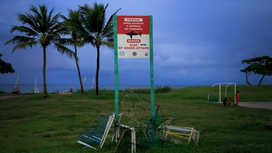 Beach warning signs are easily ignored by swimmers, as shark bites increase