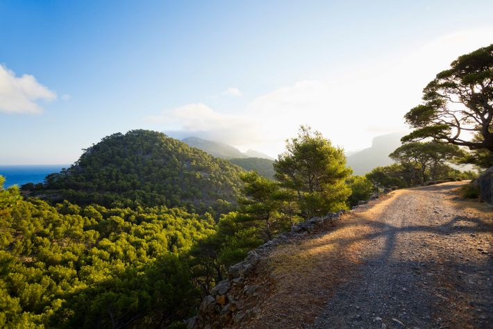 Mallorca's interior is hilly and thick with pine trees, making for beautiful, sweeping vistas.