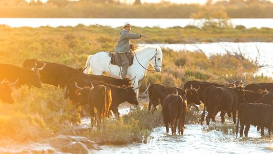 Camargue: The French Wild West