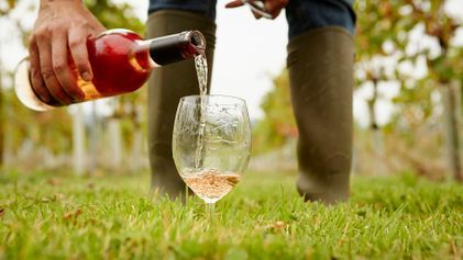 The revival of rosé wine: a guide to picking the best bottle this summer