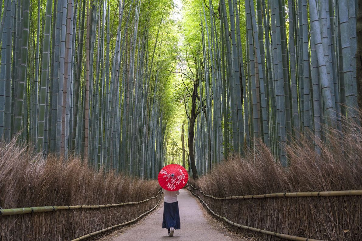 Travel Geeks: natural Japan — 12 March 2020