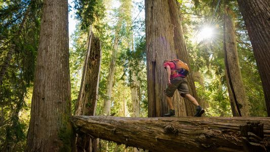 In pictures: life-affirming adventures among British Columbia's ancient peaks