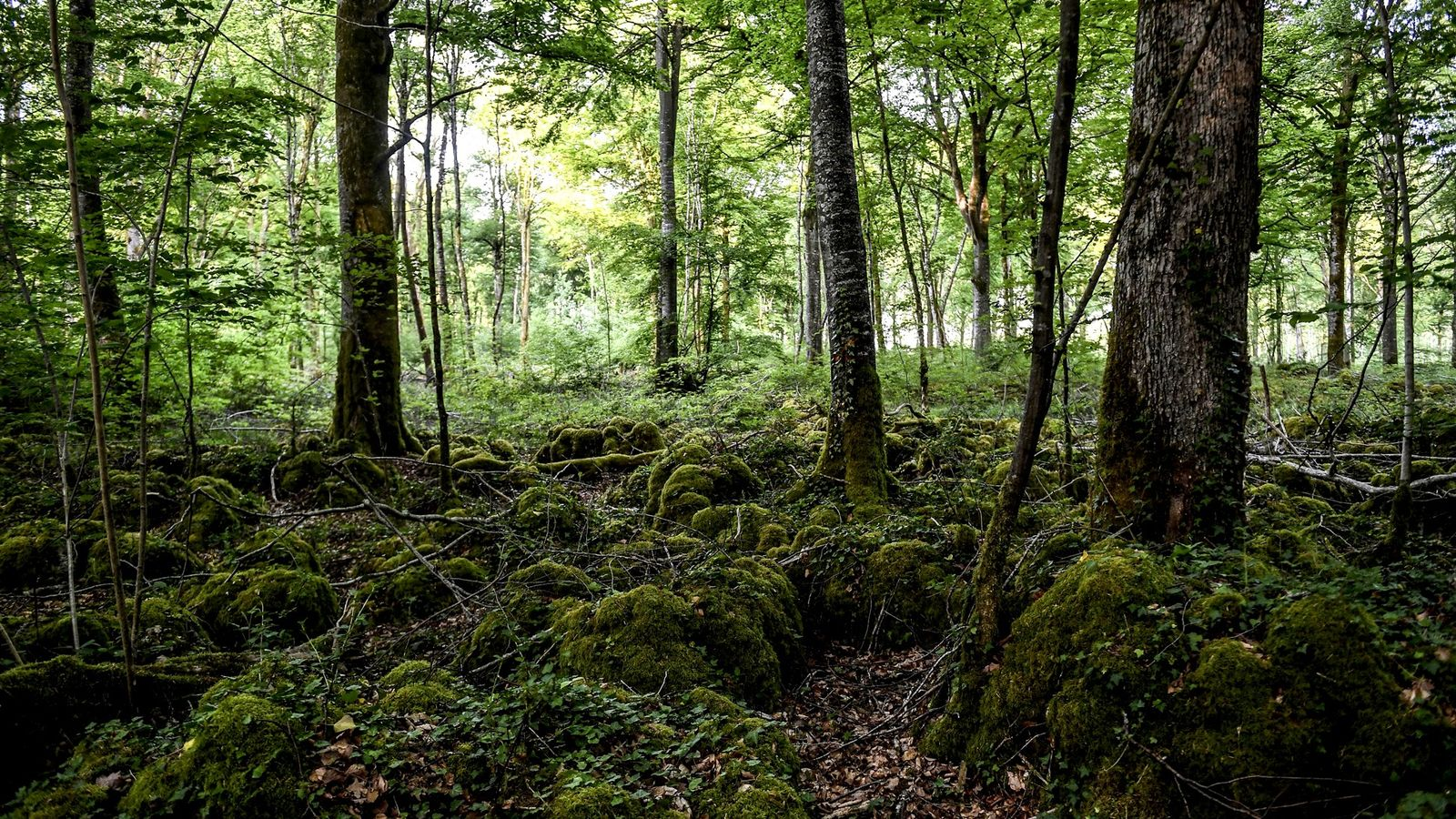 Just three hours from Paris, France's 11th national park protects a unique lowland leafy forest ecosystem.