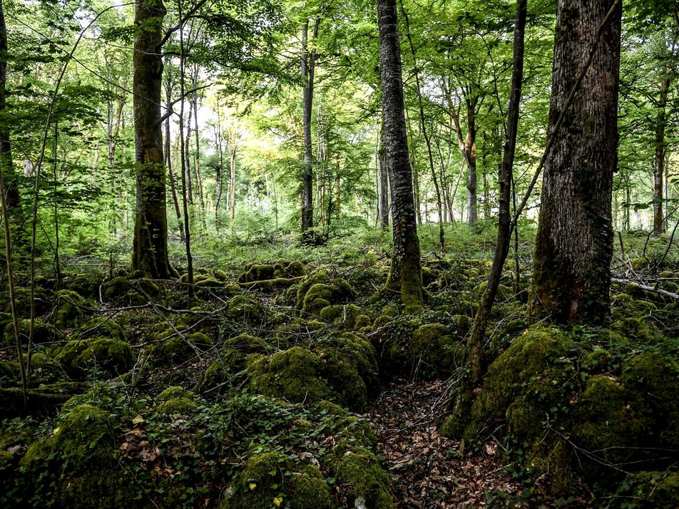 At France's newest national park, it's all about the trees