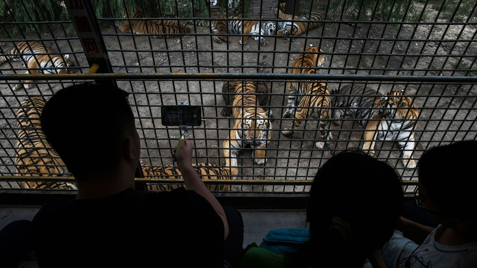 Siberian Tiger Farm