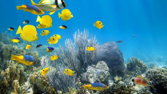 Our oceans are under immense environmental threat, but a raft of operators and organisations are offering ...