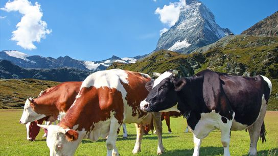 The beautiful town of Zermatt, is a mountain resort renowned for skiing, climbing and hiking.
