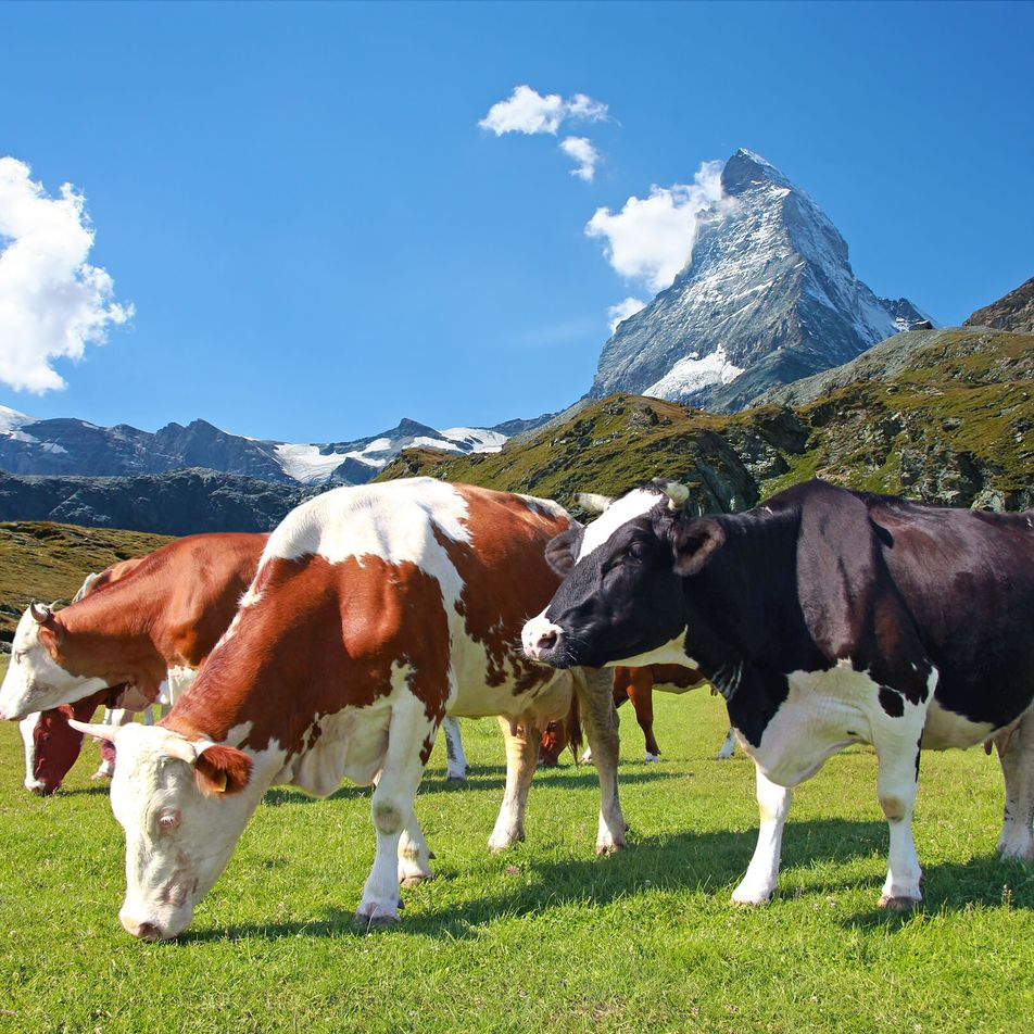 A taste of the Alps: head chef at Zermatt's The Omnia Hotel shares his top ...