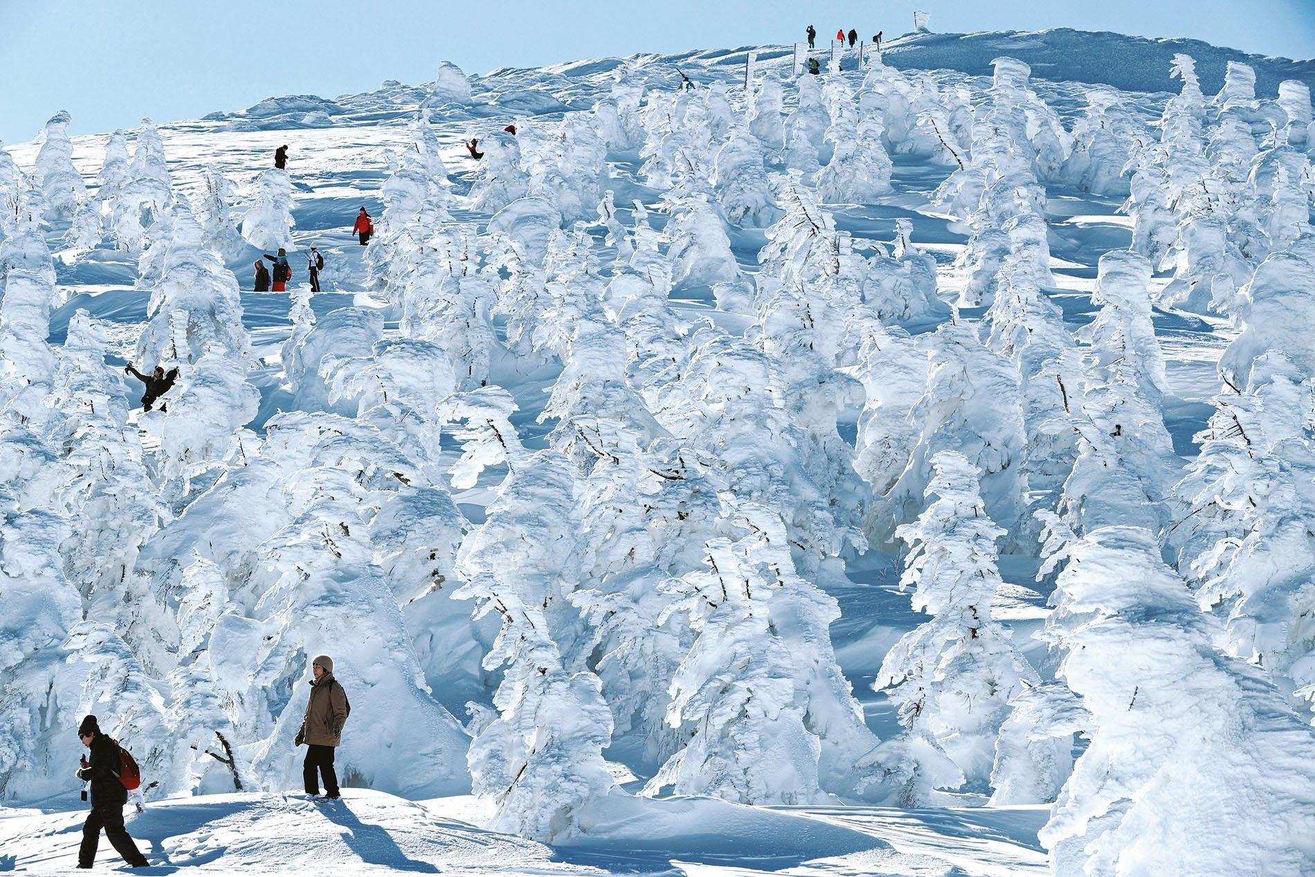 Ice-covered trees, known as snow monsters, transform southern Tokohu's Zao ski resort into a winter wonderland.