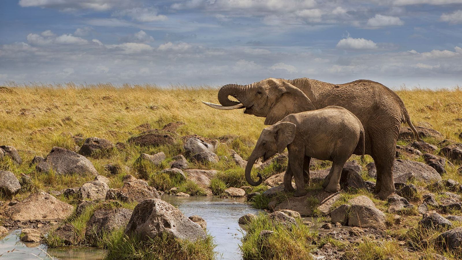 Live webcams set up in some of Africa's most diverse game reserves serve as a welcome ...
