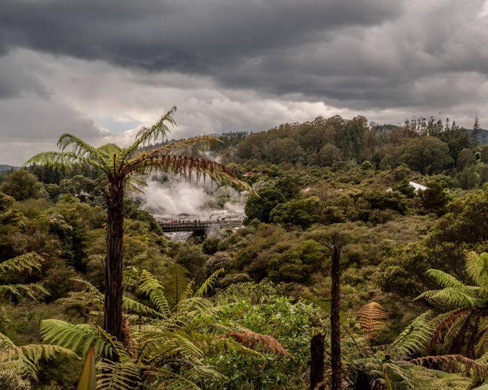 A geyser erupts in scenic Te Puia, a park and Māori cultural centre in Rotorua.