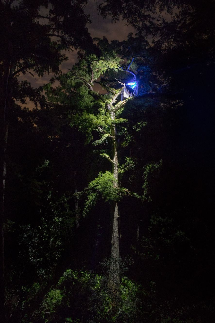 Biologist Peter Houlihan sets up a light trap 90-feet in a cypress tree. Attracted to different ...