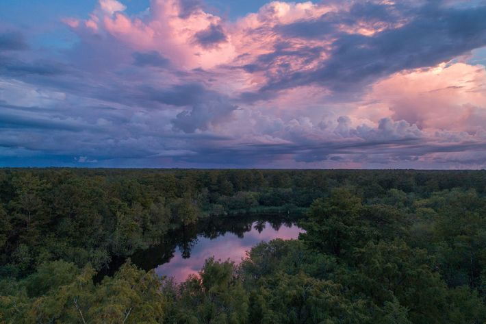 A lake in the Florida Panther National Wildlife Refuge, where ghost orchid pollination was documented by ...