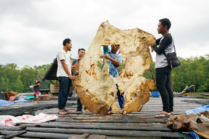Residents of Bungin, a fishing village in South Sumatra, hold up the dried skin of the ...