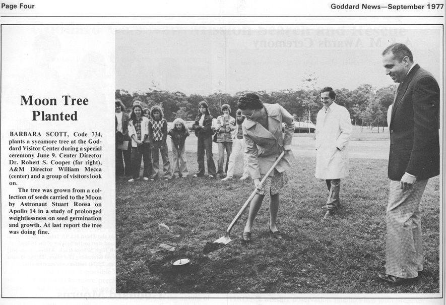 A clipping from the September 1977 issue of Goddard News shows the ceremonial planting of the ...