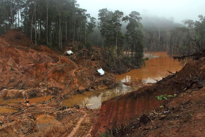 Mining in Suriname's interior has reduced jaguar habitat, which has brought the cats into contact with ...