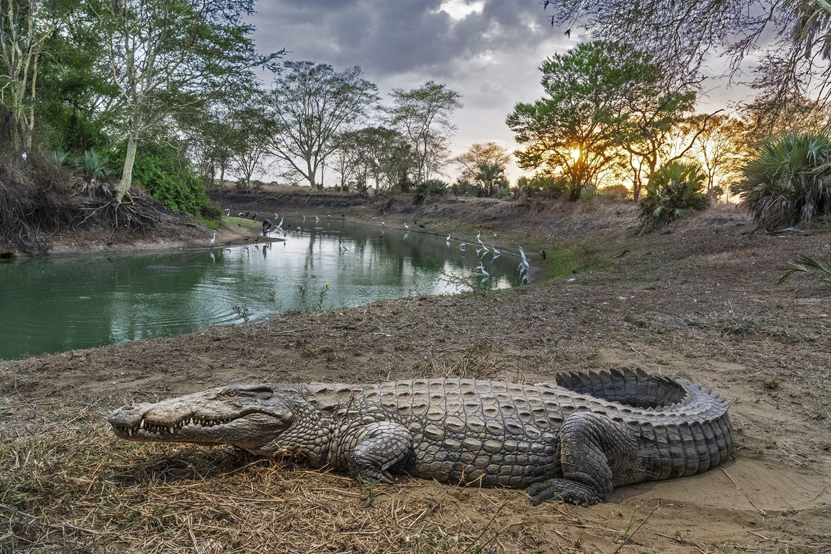 """""""You can just see nature breathing a sigh of relief."""" In Mozambique's Gorongosa National Park, wildlife's ..."""
