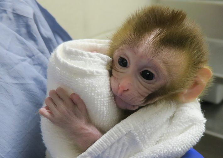 Grady clutches a towel, her eyes open wide, at two weeks old.