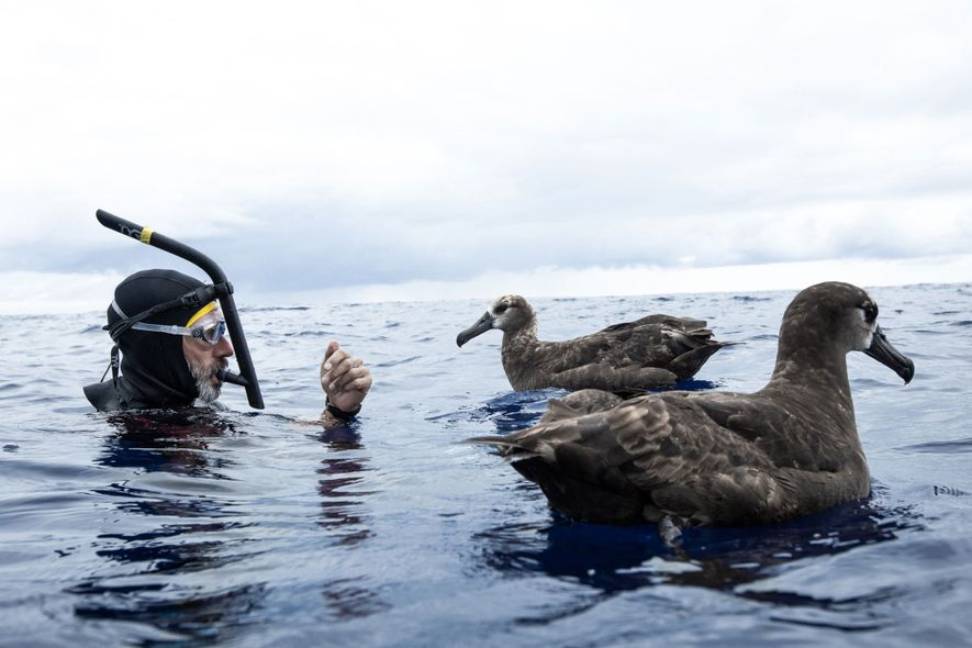 Lecomte swims with two albatrosses in the Great Pacific Garbage Patch. Large-scale plastic waste is altering ...