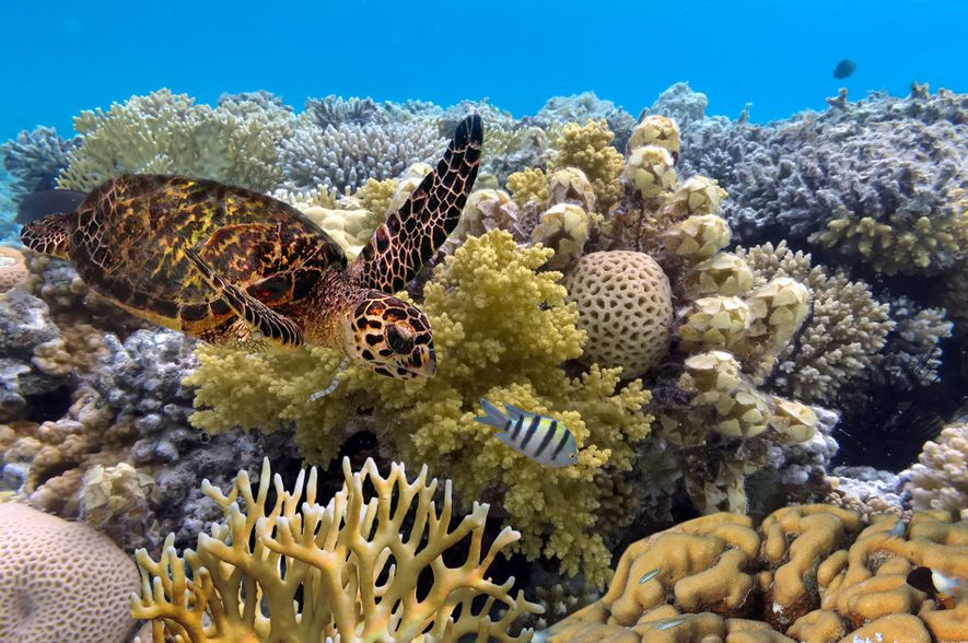 Trips of a lifetime: Great Barrier Reef
