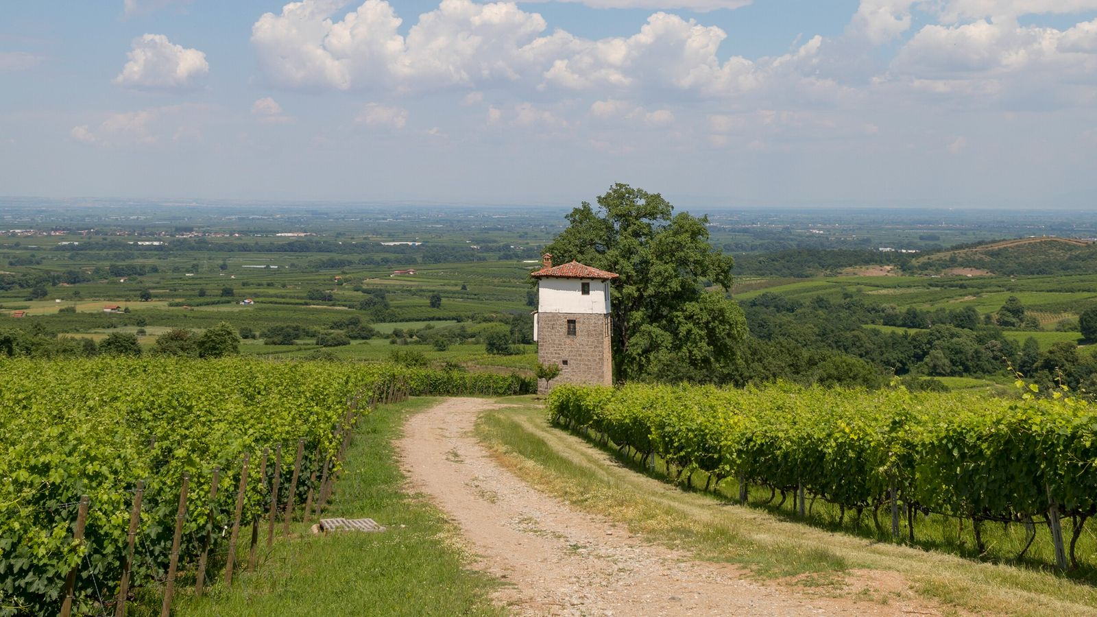 In Naoussa, on the flanks of the Vermio Mountains, grapes — especially the Xinomavro variety — ...