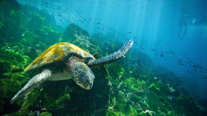 Dive Into the Wildlife-Rich Waters of the Galápagos