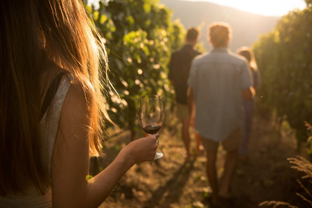 A group walks through the vineyards at Painted Rock Estate Winery.