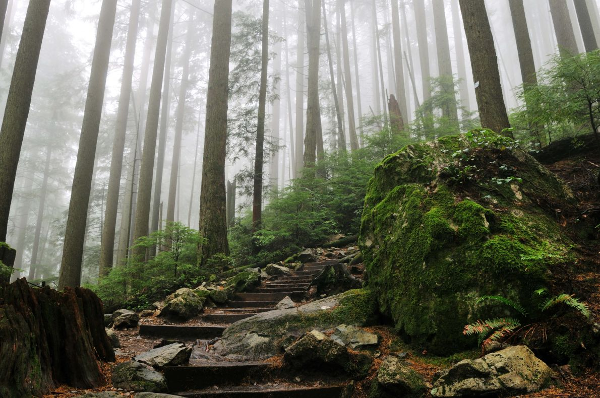 The Grouse Grind trail feels more like a steep staircase than a hiking trail, but the ...