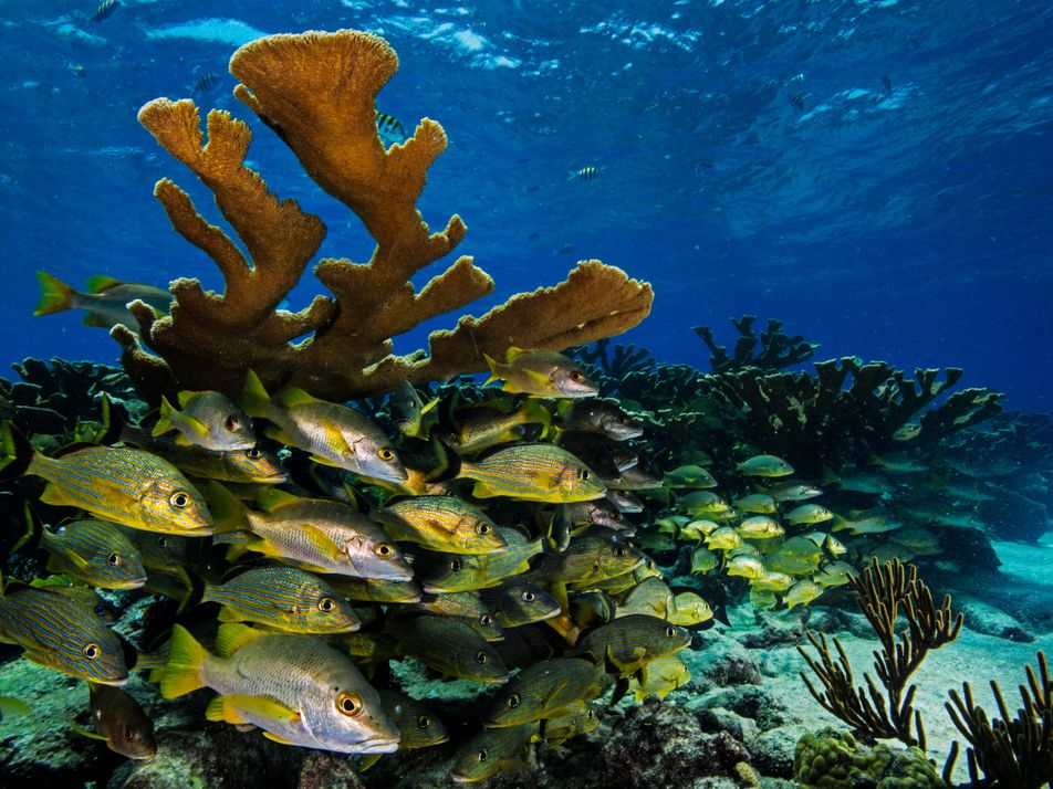 Cuba's Underwater Jewels Are in Tourism's Path