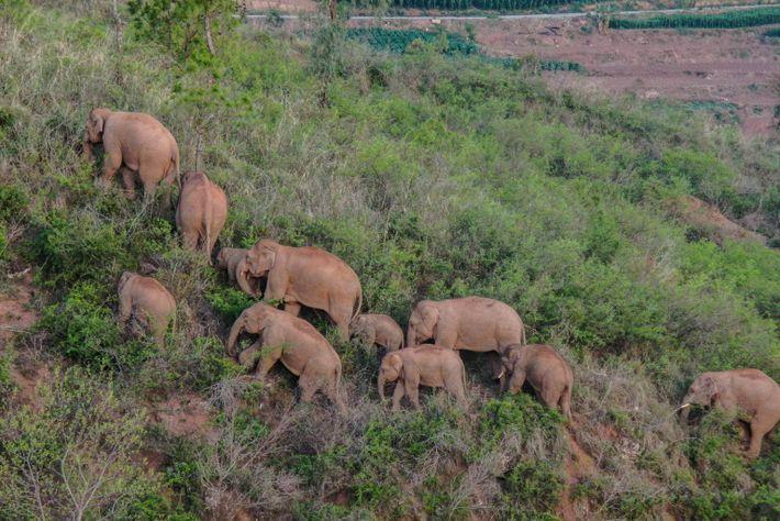 02-china-herd-elephants