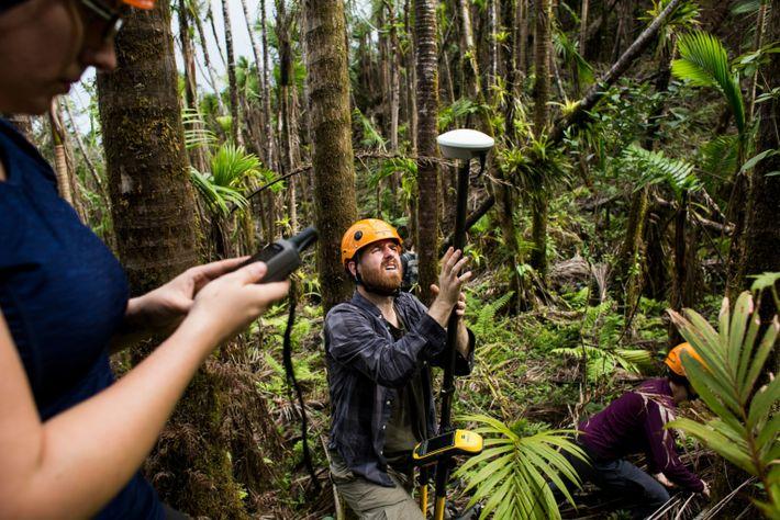 rainforest-research-hurricane