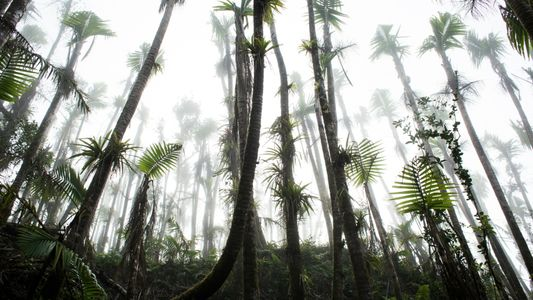 Climate change may be pushing rainforests to a breaking point