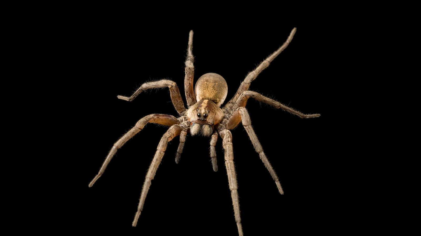 """""""Spiders are usually black or gray and hide by day. They often spin their webs in ..."""