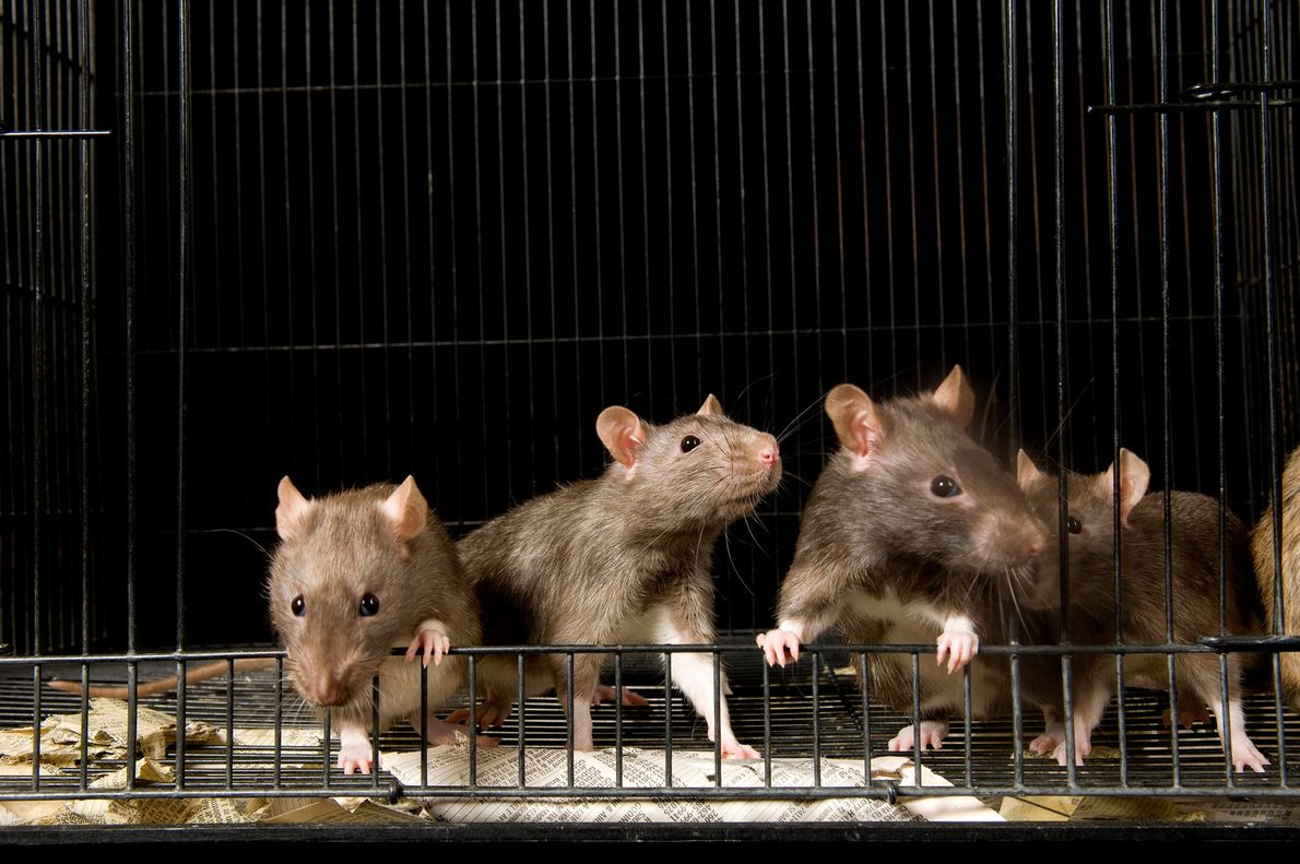 """""""In antiquity, rats were known to infest abandoned, filthy, or tumbledown places believed to be haunted ..."""