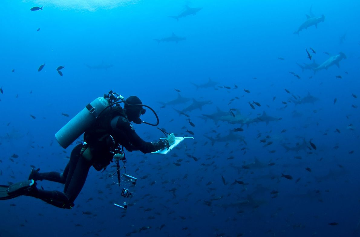 Marine scientist and National Geographic explorer Pelayo Salinas assesses shark conservation and management in the Galapagos ...