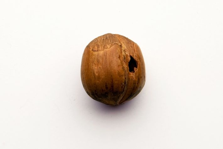 This hazelnut-shell token has a hole, suggesting that a ribbon or cord was used to tie ...