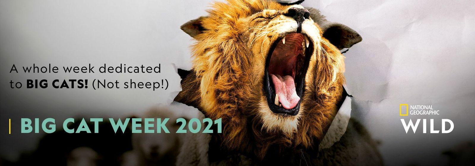 Big Cat Week 2021