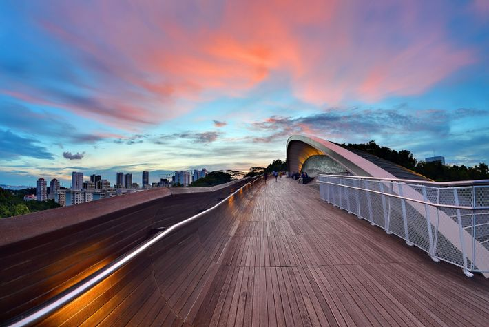 The Henderson Waves Bridge in Singapore is great for bird watching at sunrise, or from 7 ...