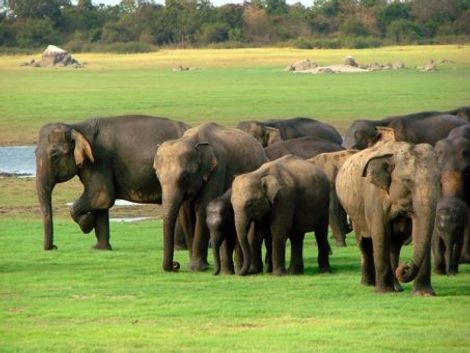 Uncover Sri Lanka