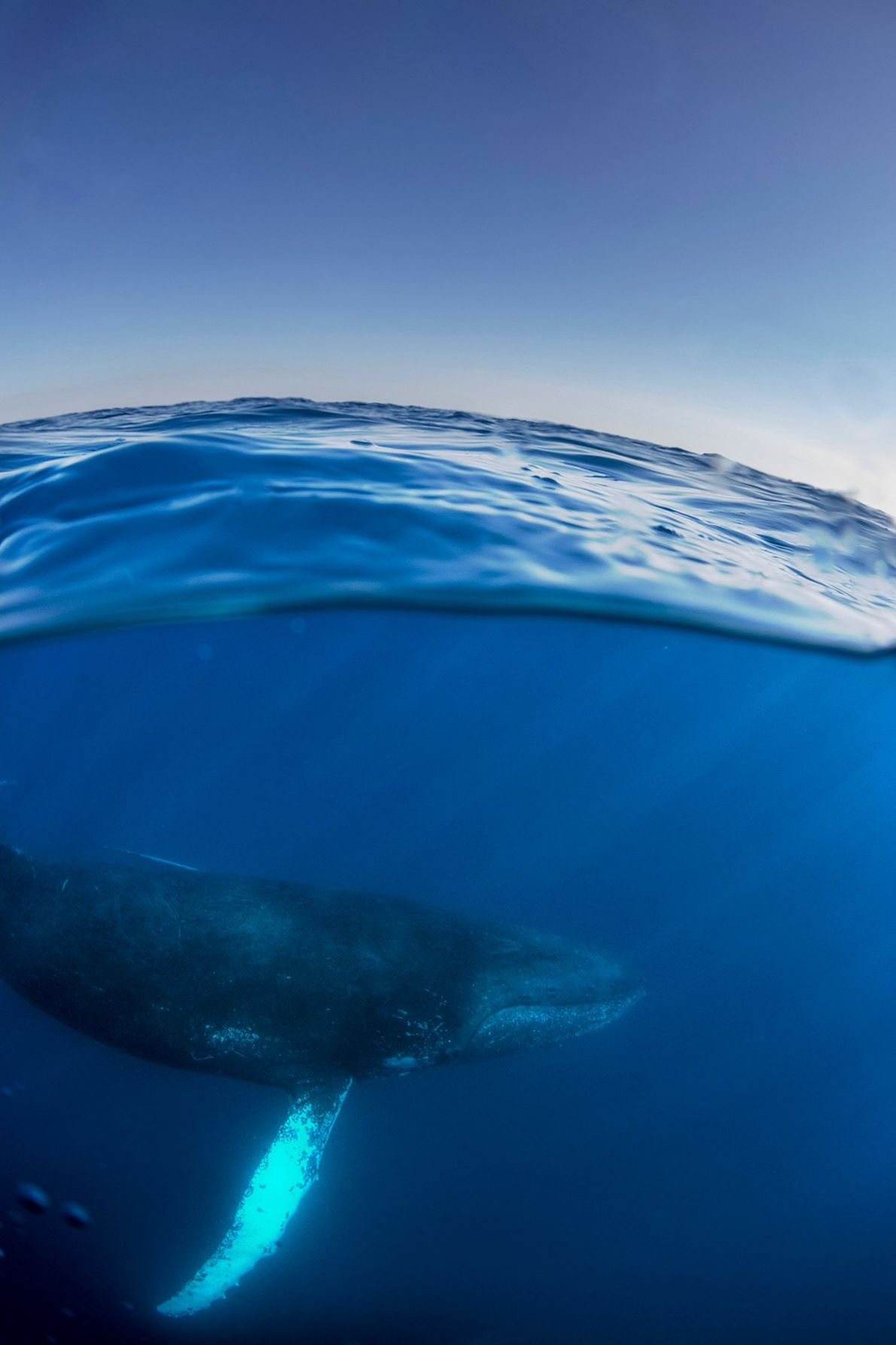 More recently, Smart has begun to focus on underwater photography, including photographing this humpback whale in ...