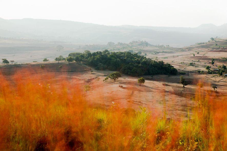 The fields near the Gebita Giyorgis Church are encroaching on the patch of church forest.