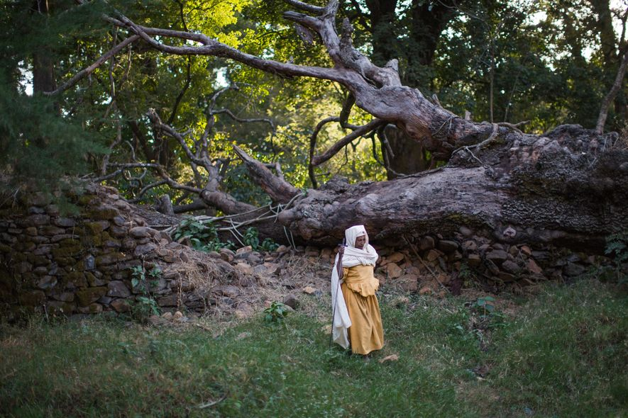 """These """"church forests"""" protect Ethiopia's fragile landscapes"""